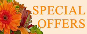 Special Offers November
